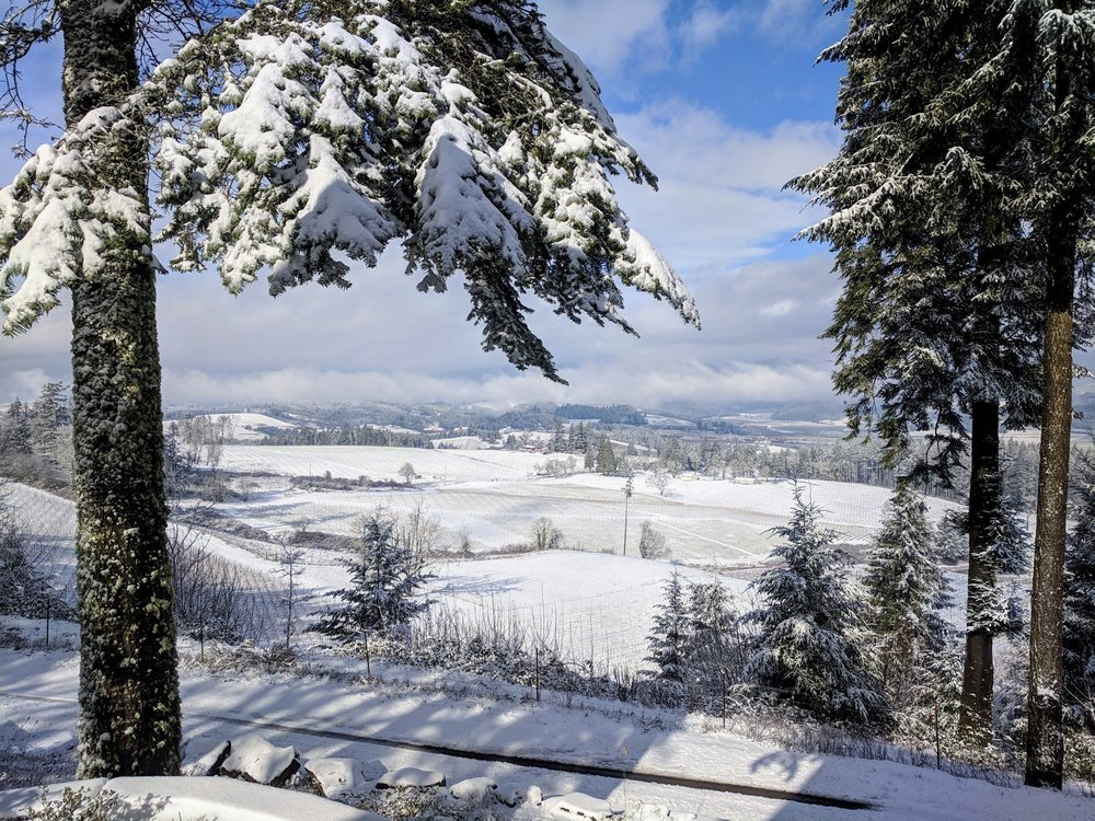 snow-vineyard.jpg