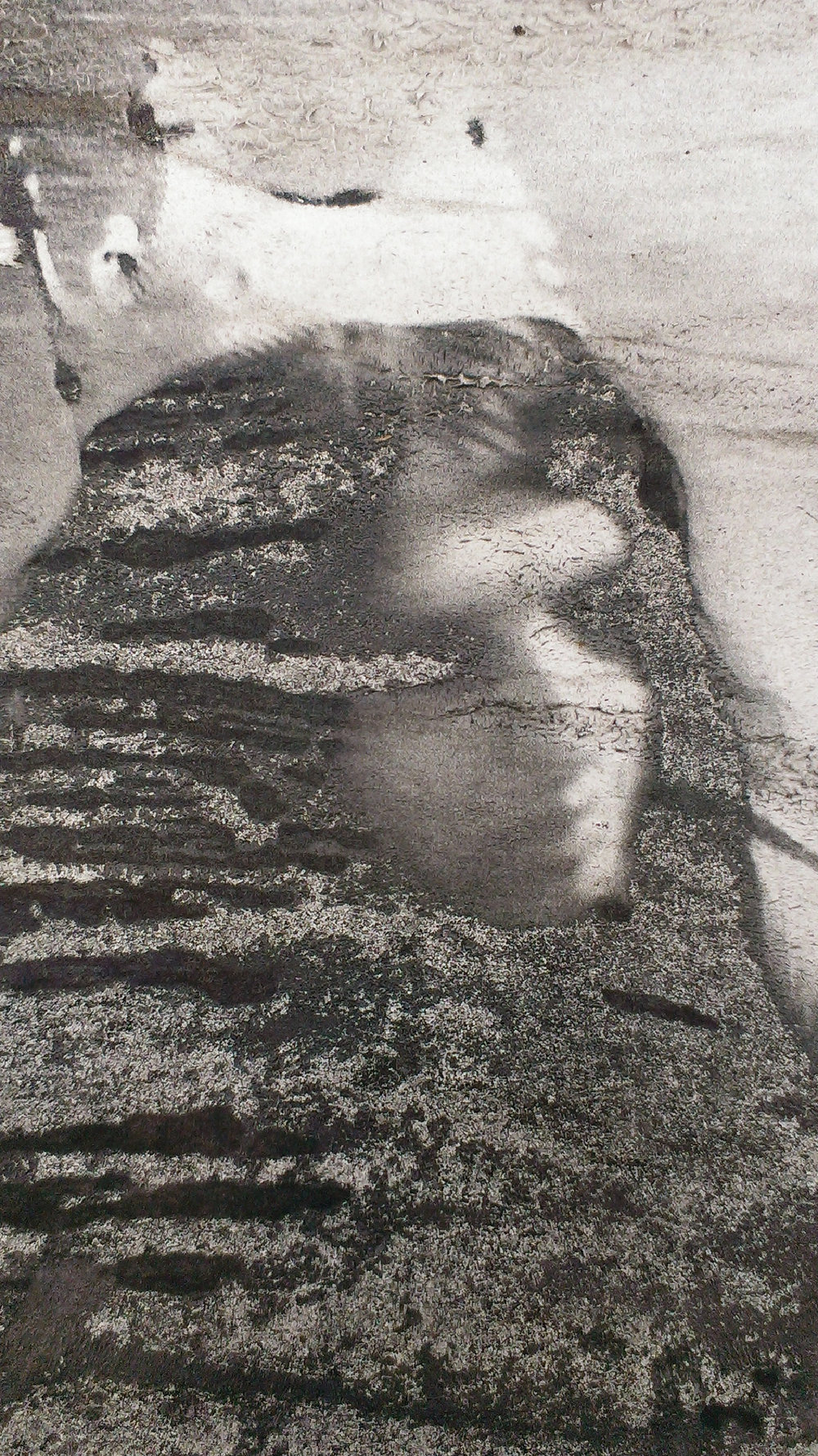 Copy of Denham Carr_Queenie_Archival Photo Print_25x14cm.jpg