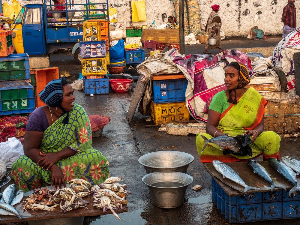 Visiting and selling fish at Chennai's Kasimedu fishing harbor