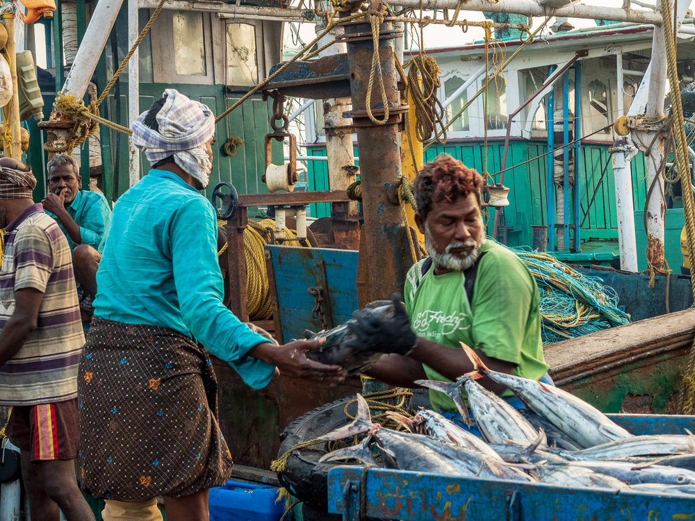 Unloading a fishing boat at Chennai's Kasimedu fishing harbor