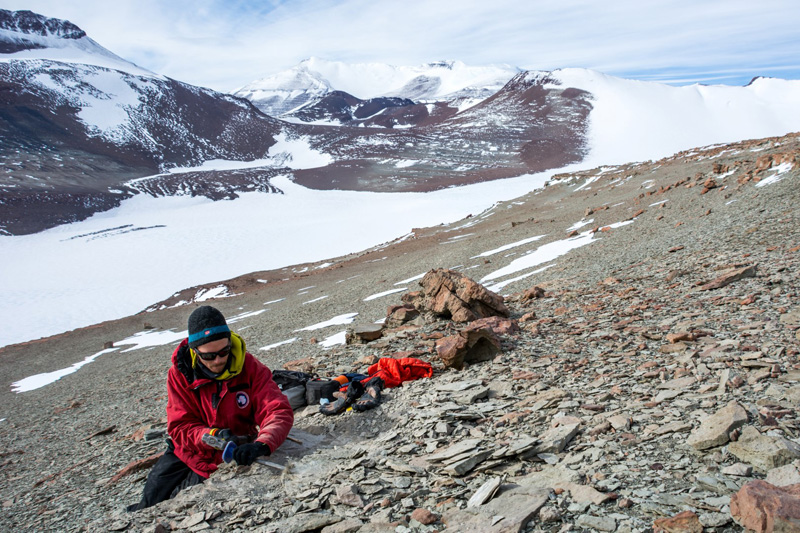 Paleo Gondwanaland Was Full Of Lystrosaurs - Newly Collected Fossils Offer A Glimpse Into The Prehistoric World Of Antarctica