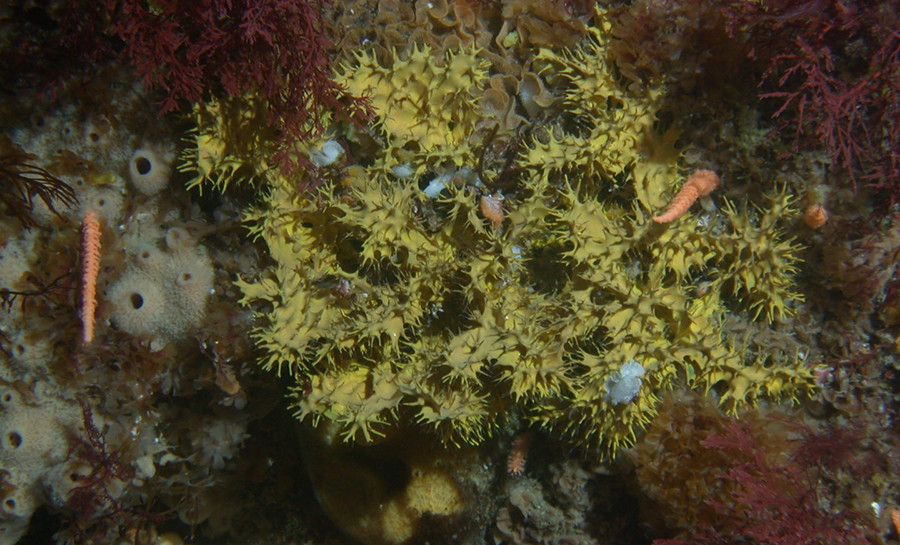 Antibiotics From A Sponge - Could A New Compound From Antarctic Sea Sponges Be The Key To Breaching MRSA's Impregnable Barricades?