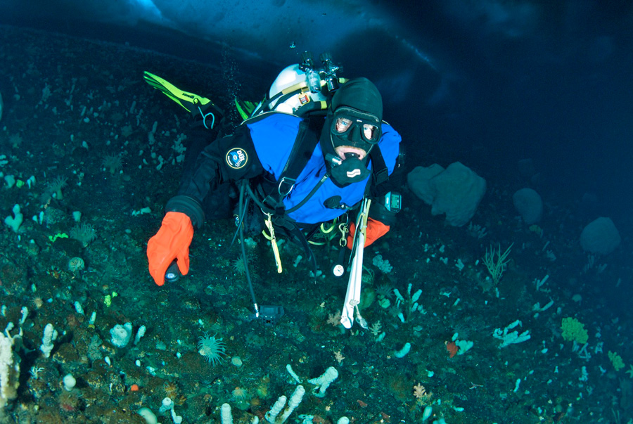 2,000 Dives Under The Antarctic Sea -