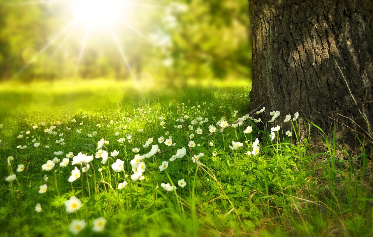 spring-276014_1280 pixabay