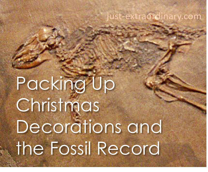 Packing up Christmas Decorations and the Fossil Record just-extraordinary.com