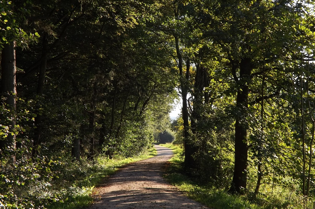 forest-path-1141798_1280