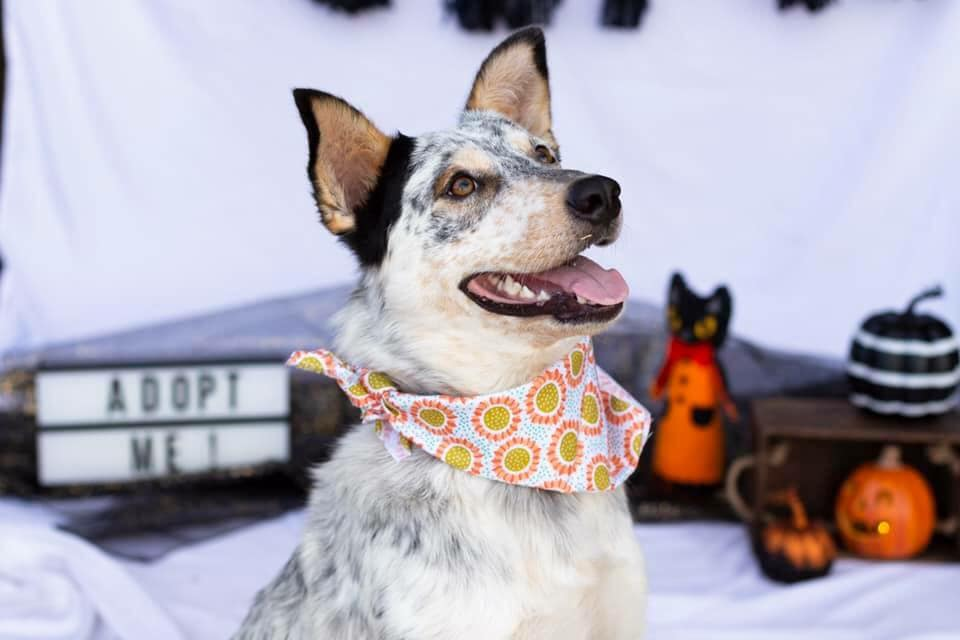 Adoptable Dogs - At Infinity Farms