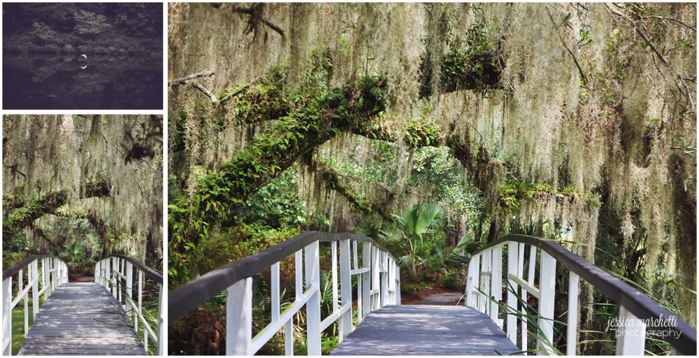 Charleston South Carolina Images_37