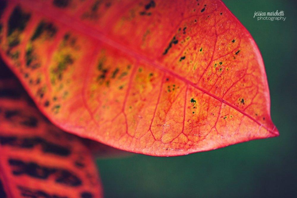 Macro Plant Photography_0002