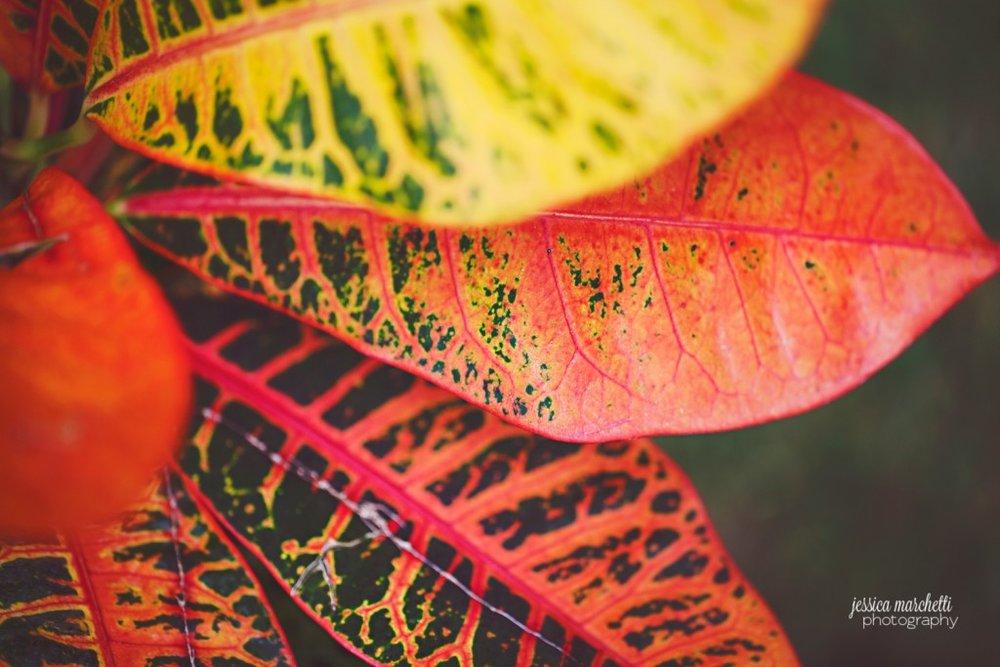 Macro Plant Photography_0009