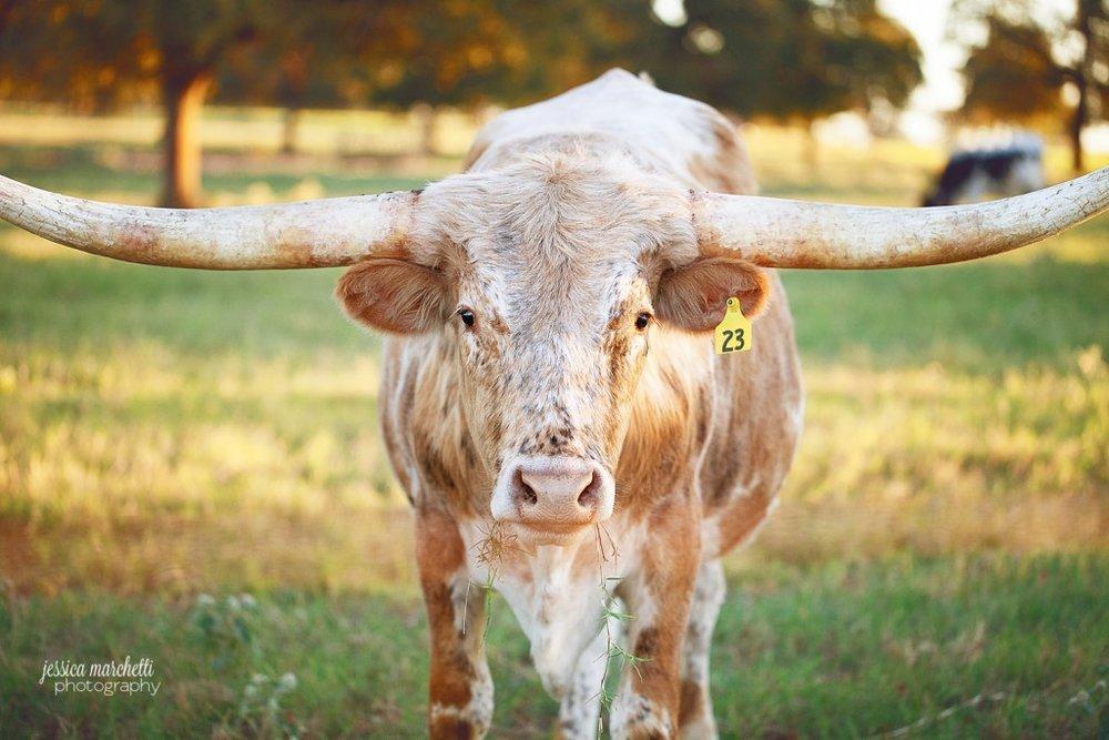Texas Longhorns 10