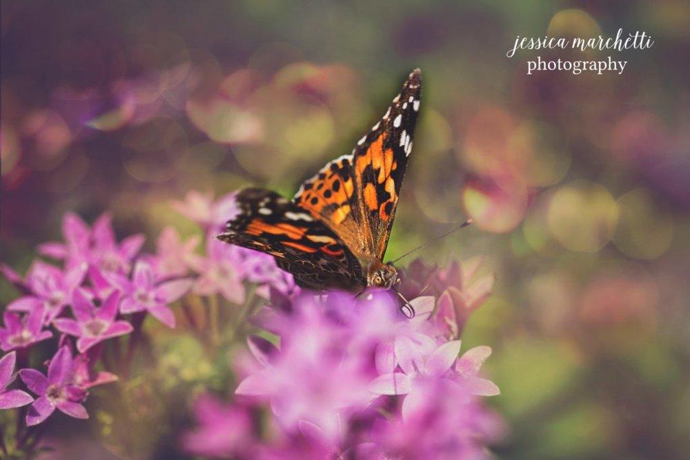 Butterfly-Pentas-11-1024x683.jpg