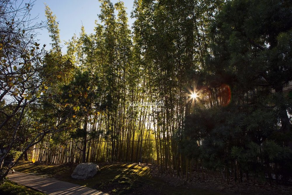 Landscape-Photograph-Wall-Art_0044-1024x683.jpg