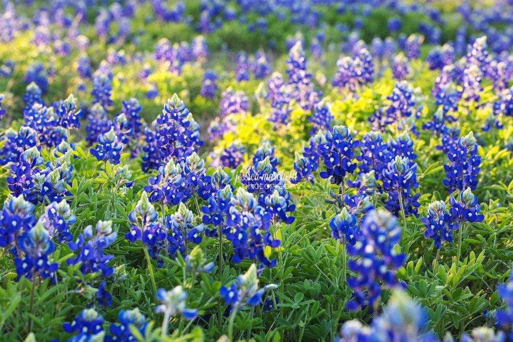 Texas-Bluebonnet-Wall-ARt_0009-1024x683.jpg