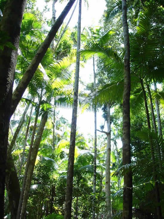 Fraser Island Rainforest