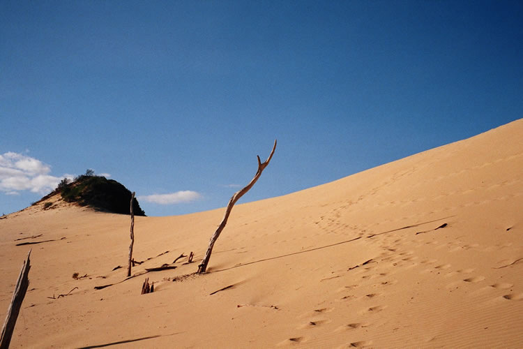 Fraser Island Sand Hills