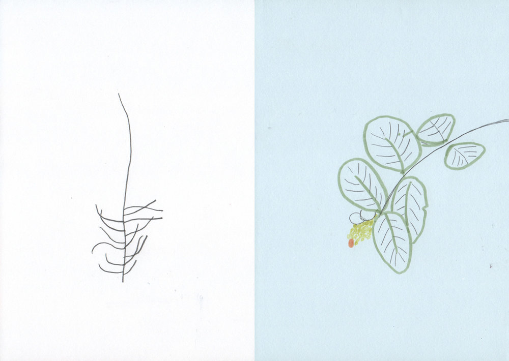 illustration-garten3-deborahlaetsch.jpg