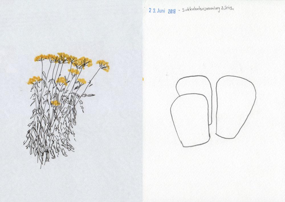 illustration-garten5-deborahlaetsch.jpg