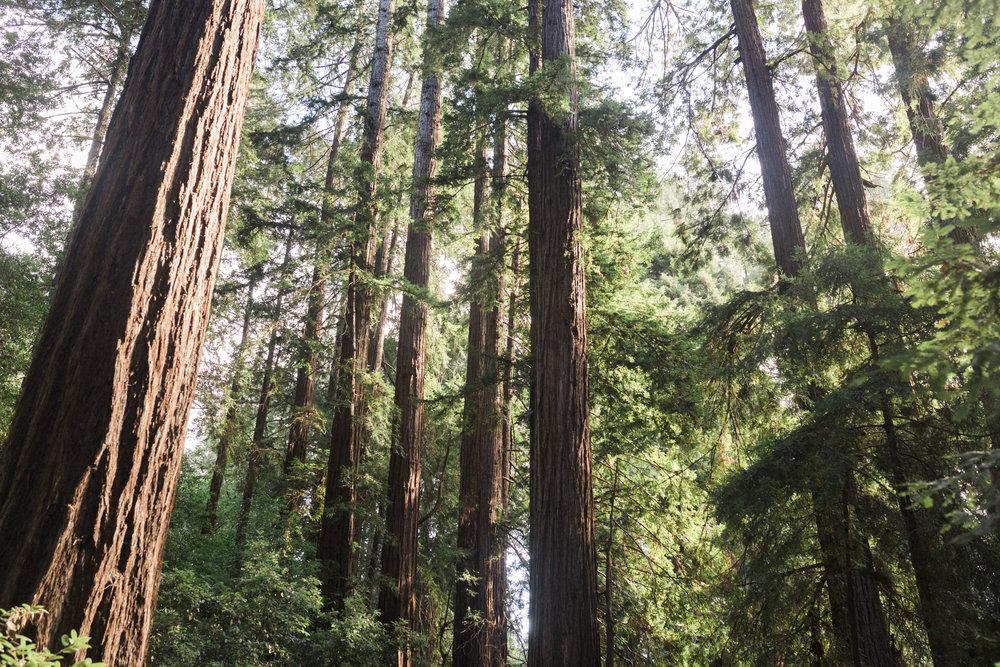 California Yosemite Big Sur Muir Wood Colin Mukri 1_208.jpg