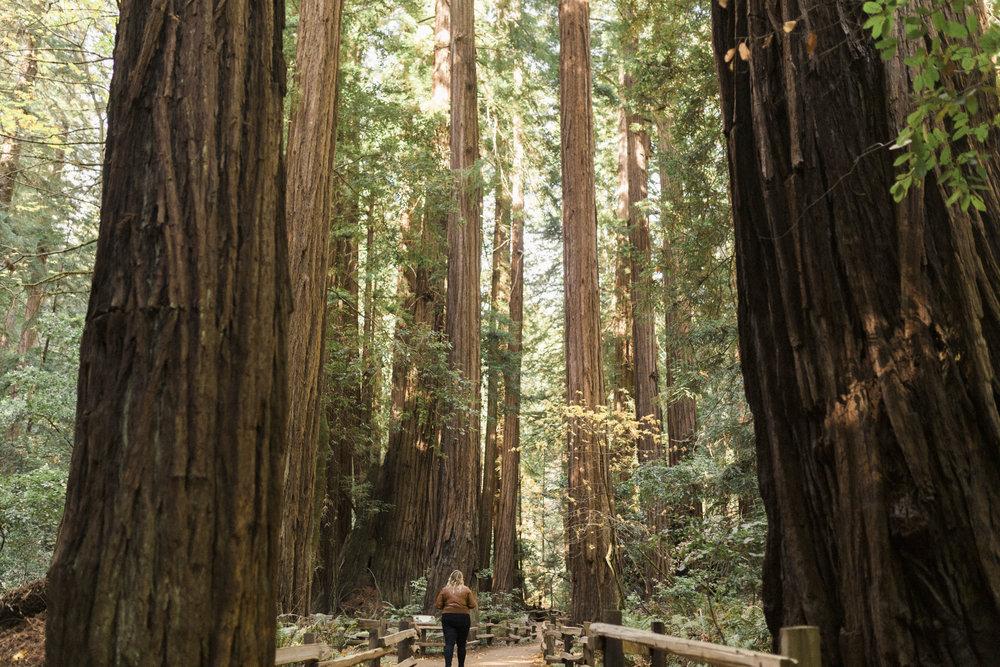 California Yosemite Big Sur Muir Wood Colin Mukri 1_196.jpg