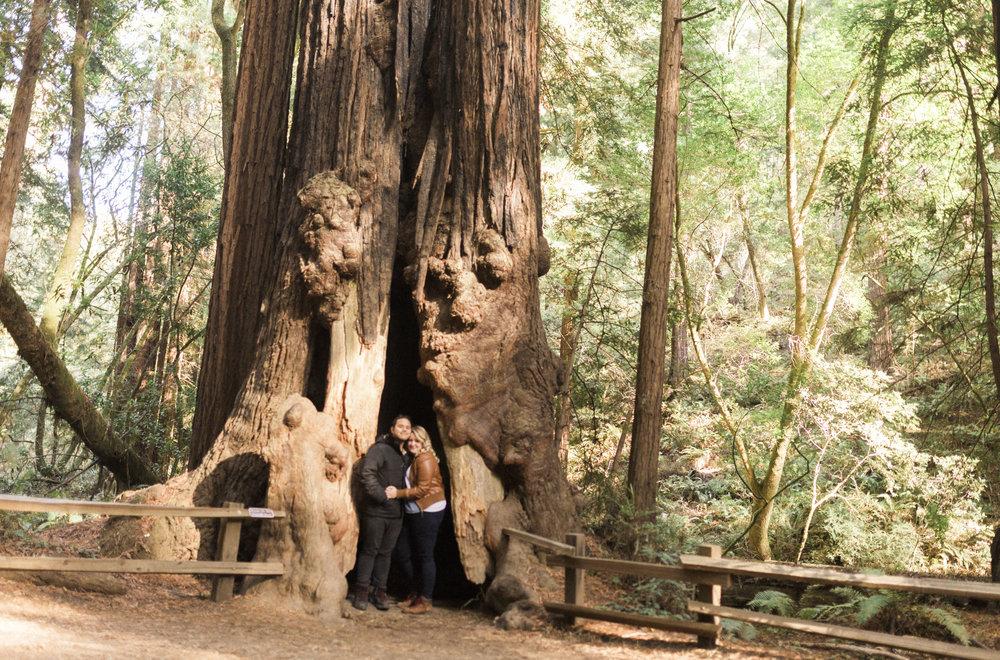 California Yosemite Big Sur Muir Wood Colin Mukri 1_194.jpg