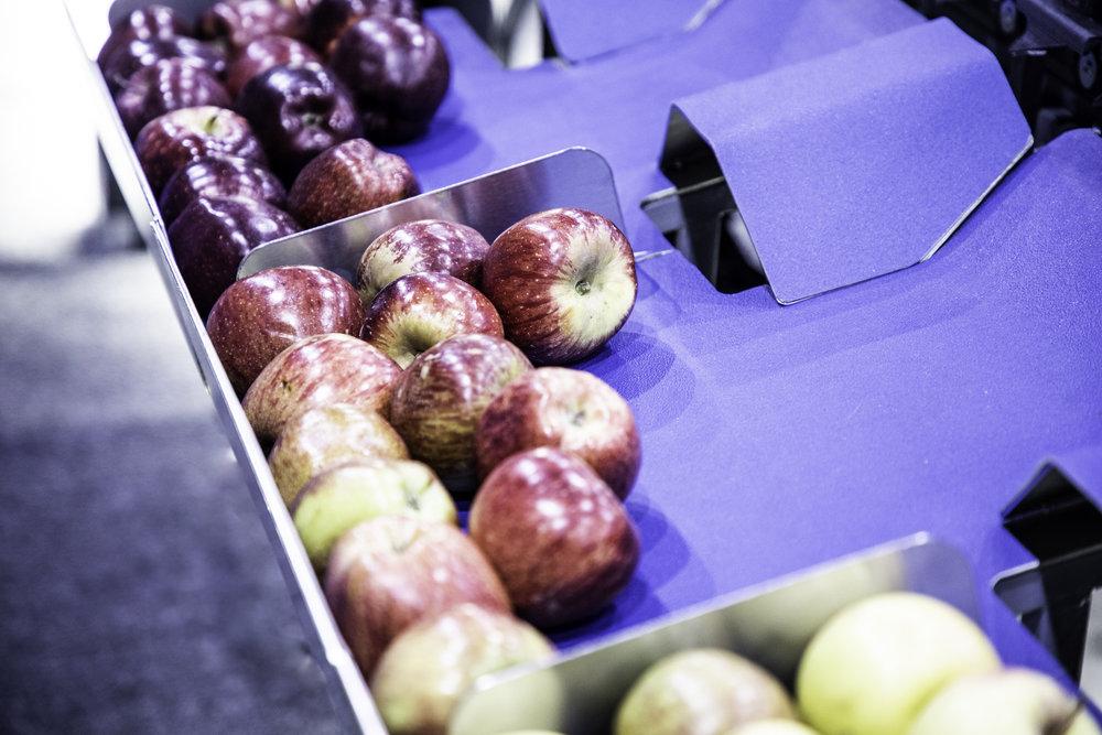 Sorted Apples - 2.jpg