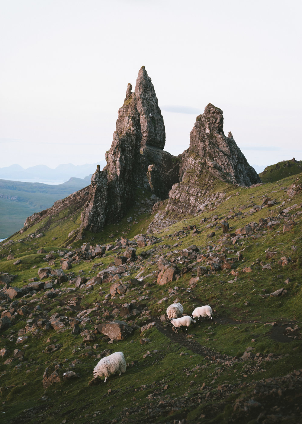 Sheep at the Storr (1 of 1).jpg