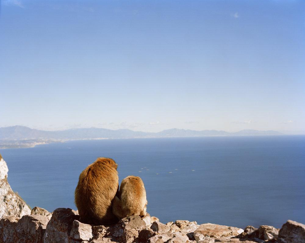 0031_Gibraltar_Monkeys.jpg