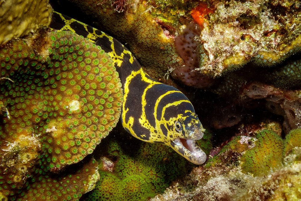 Diving Bonaire 2018 - the healthiest reef in the Caribbean
