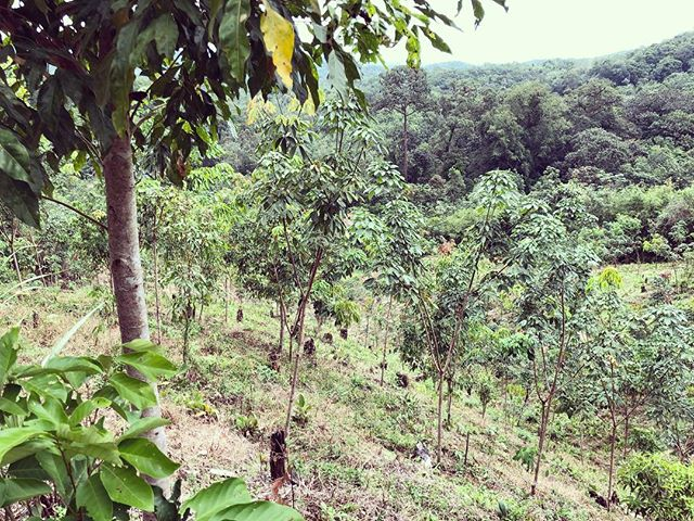 So lush and so green 🌳✌️ We're on the ground checking the progress of your trees in Indonesia! These were planted in 2017 🤯 #theygrowupsofast