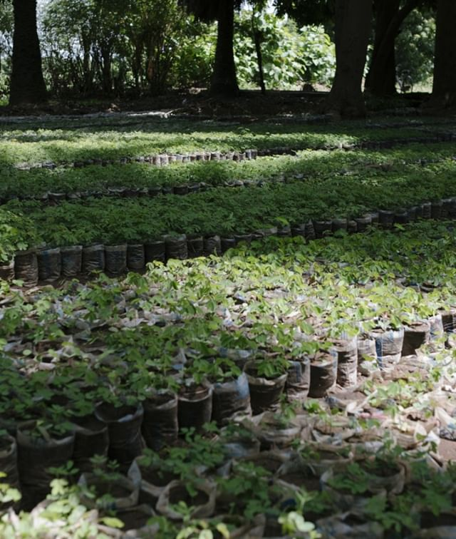 It's the #FirstDayofSpring! These sprightly tree saplings are growing in our nursery in Ghana, and will become forests one day 🐣  #newbeginnings #Fruehlingsanfang