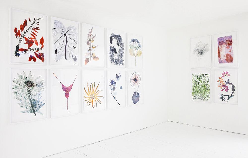 "Nick Knight, ""Flora"" series at SHOWstudio Shop, 2012"