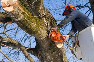 Tree Topping - Are your trees growing too large for your property? If your oak is ruining the perfect view from your home, call us to remove the problem. We completely clean up your mess and leave your property looking great.