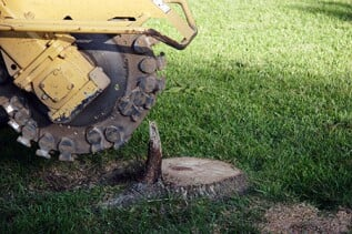 Stump Removal & Grinding - Once your tree is cut down, let us remove the leftover stump. We remove your stump below grade level so that you can plant flowers, sod, or shrubs with ease.