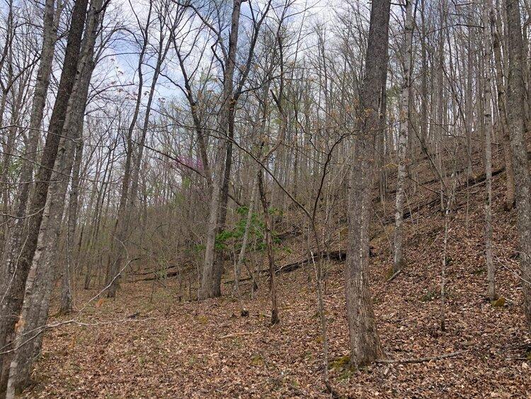 Wooded slope in Huntsville, TN.