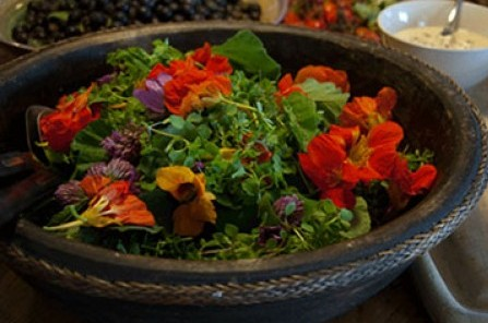 wild salad at Foragers Feast
