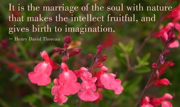 Thoreau quote- it's the marriage