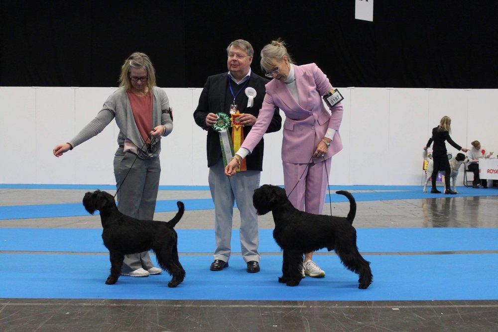 Best of breed Velvet Dandy´s Fafner