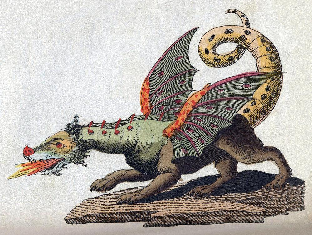 Dragon III litter - Velvet Dandy´s FalkorVelvet Dandy´s MaleficentVelvet Dandy´s HydraVelvet Dandy´s LudmilaVelvet Dandy´s MatchesVelvet Dandy´s Cordelia