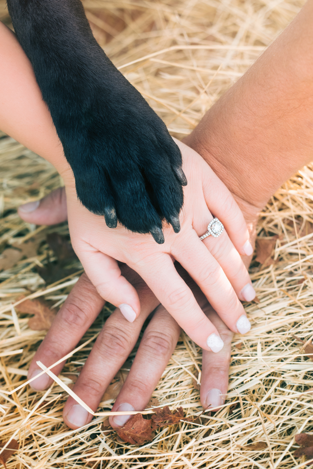Engagement-with-Dog-photography-Upper-Bidwel-Park-Chico-3-2.jpg