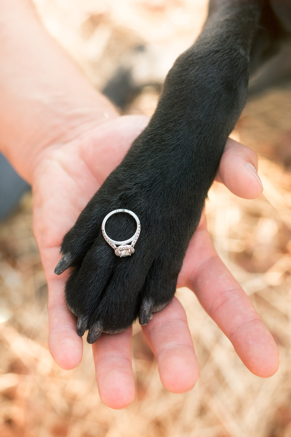 Engagement-with-Dog-photography-Upper-Bidwel-Park-Chico-1.jpg