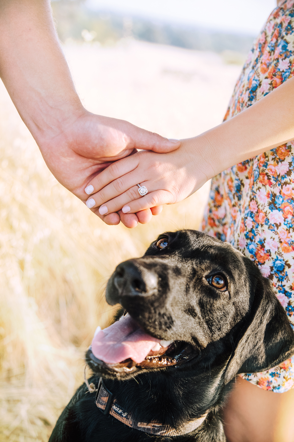 Engagement-with-Dog-photography-Upper-Bidwel-Park-Chico-9.jpg