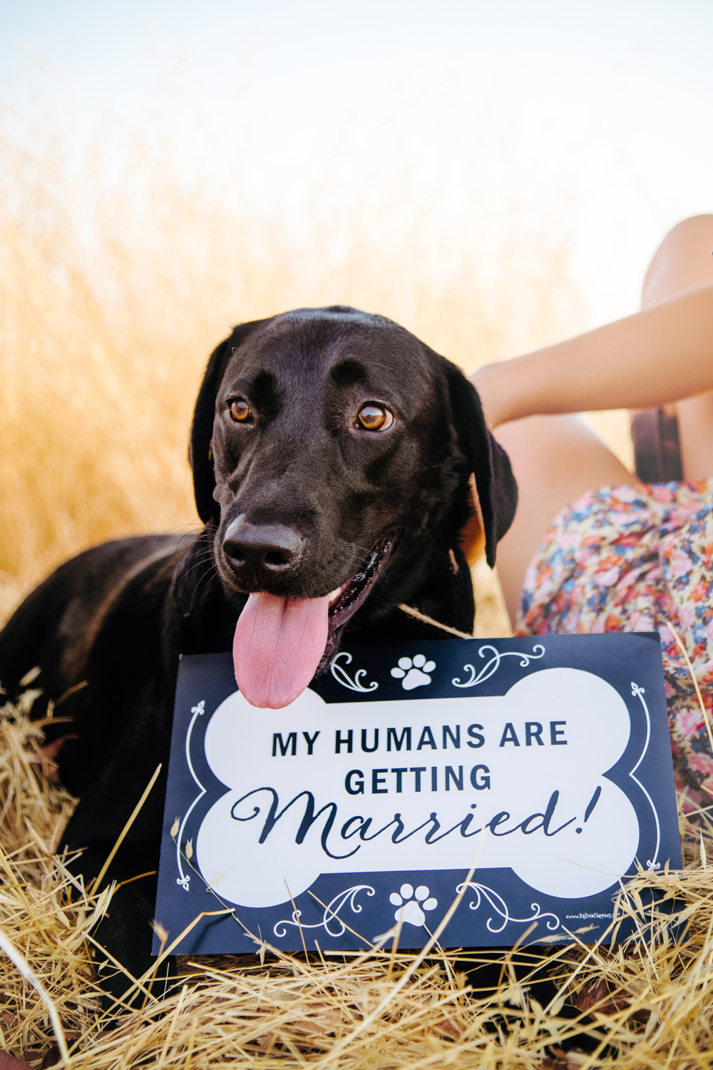 Engagement-with-Dog-photography-Upper-Bidwel-Park-Chico-10.jpg