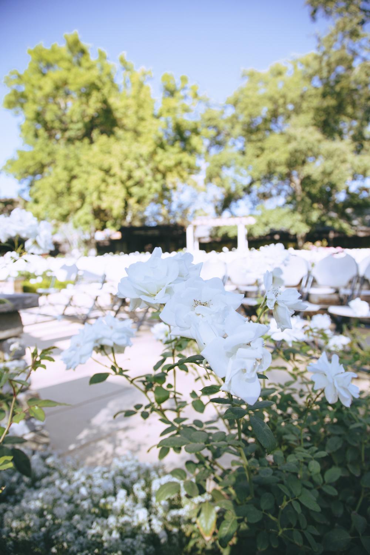 Wedding-photographer-at-Creekside-Rose-Garden-Chico-CA2Wedding-photographer-at-Creekside-Rose-Garden-Chico-CA.jpg