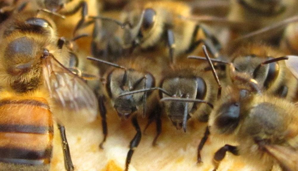 bees751.jpg