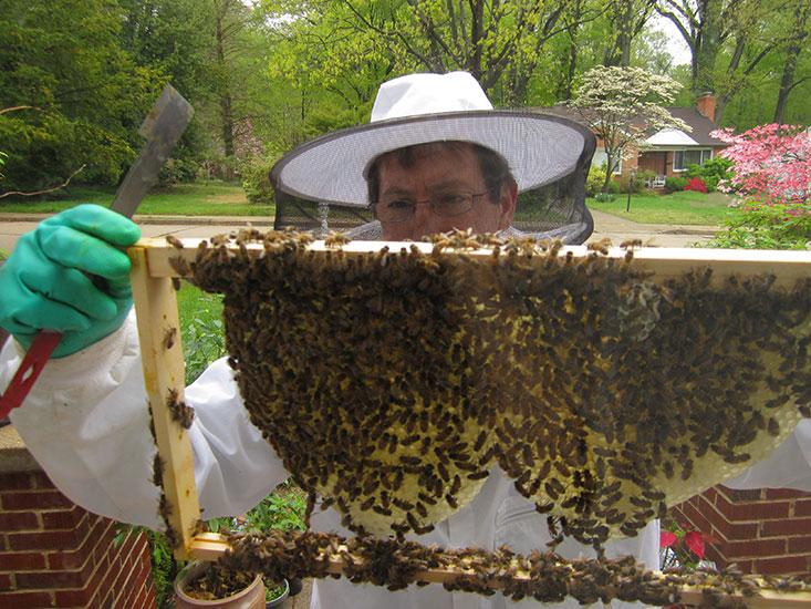 bill-swarm-removal.jpg