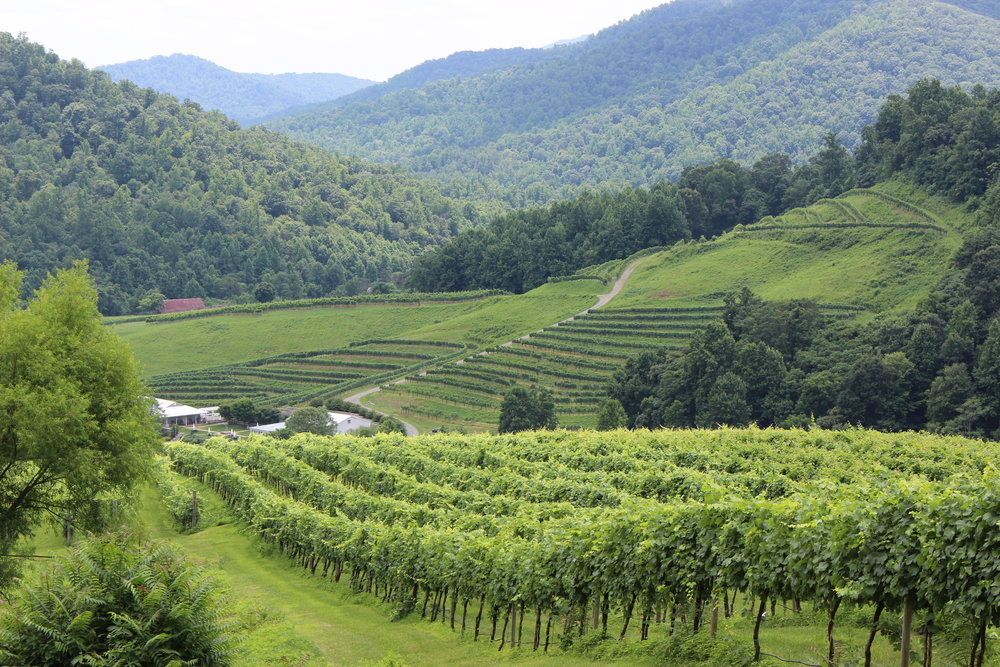 DelFosse Vineyards - Virginia