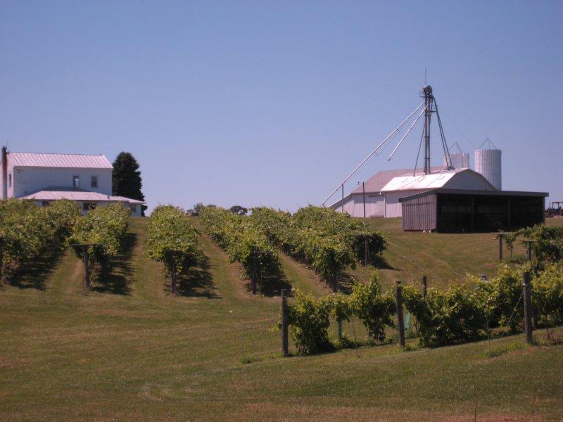 Caesar Creek Vineyards - Ohio