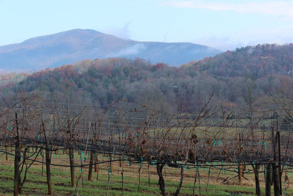 Kaya Vineyard & Winery - Georgia