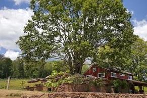 rosabianca Vineyards - Connecticut